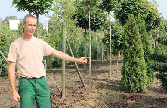 Durch die angeschlossene Baumschule kann Marco Bosse in seinem Gartencenter auch mehrjährige Bäume anbieten.