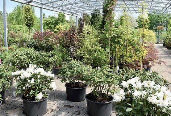 Für Ihre Gartenbepflanzung finden Sie vor Ort eine große Auswahl hevorragender Pflanzen, zum Beispiel Azaleen.