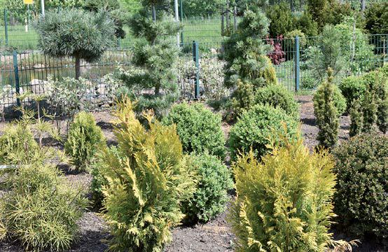 Ziergehölze in vielen Formen und Arten gibt es im Gartencenter Bosse.