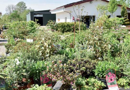 Kleine Pflanzen – zum Beispiel für die Terrassenbepflanzung – runden das Angebot ab.