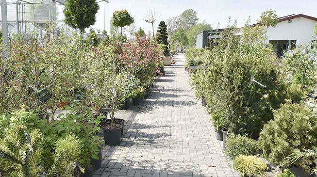 Ziergehölze, Obstbäume, Hecken, Garten- und Terrassenpflanzen – das Angebot ist riesig.